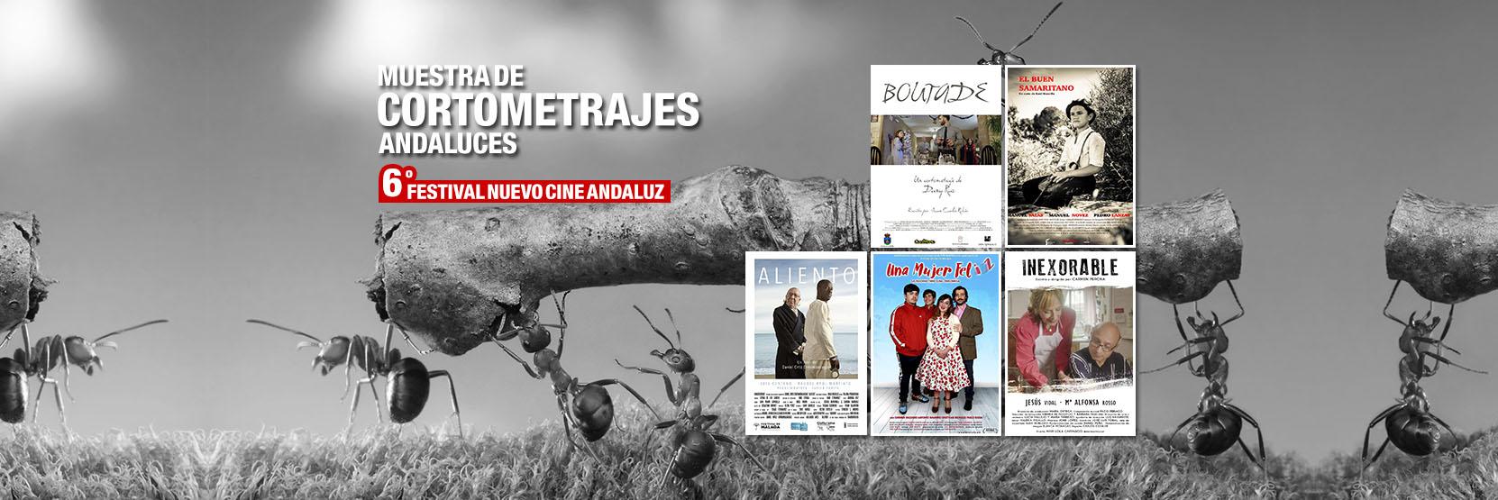 Muestra de Cortometrajes Andaluces 2019