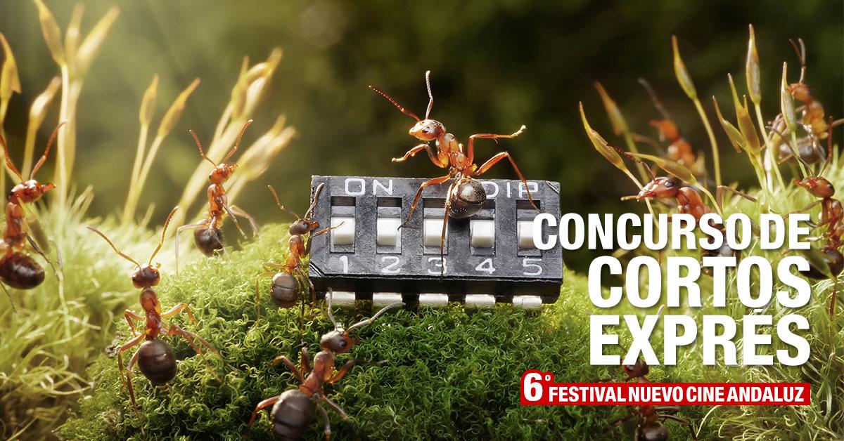 Bases concurso Cortos Exprés Nuevo Cine Andaluz 2019